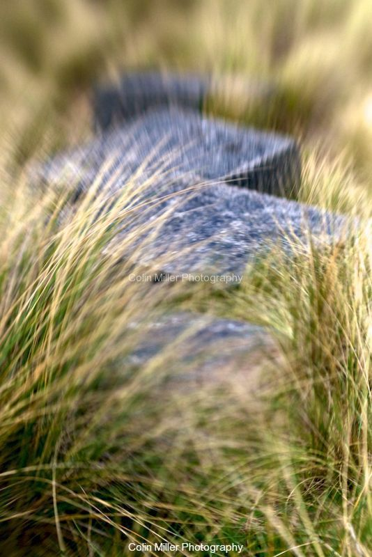 Tank Traps and Marram Grass